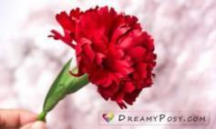 Hướng dẫn làm hoa cẩm chướng bằng giấy.